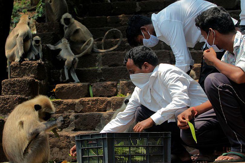 印度猴「肺部腫脹」集體死亡 專家:出現「疑似武肺」症狀...