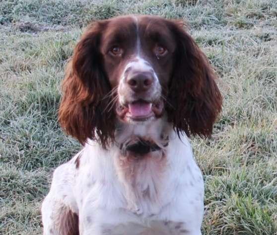 害怕衛生紙之亂!蘇格蘭訓練「專找衛生紙警犬」嗅出囤貨犯!