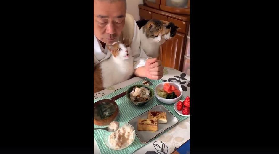 淡定阿北示範「佛系撸貓」絕技 網肉搜大驚:難怪可以做到!