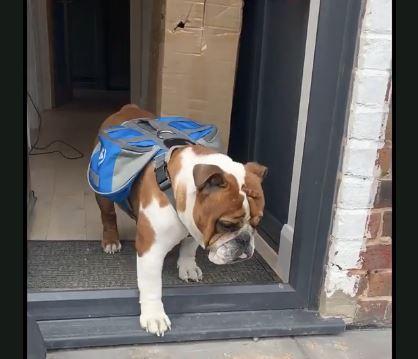 在家隔離就靠「狗狗外送餅乾」 鄰居開門驚見「毛茸茸快遞」❤