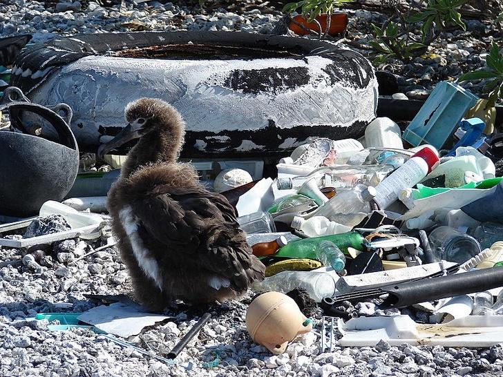 15張讓人類「看了好自責」的動物生活照 北極熊「被罵神經病」捧成巨星!