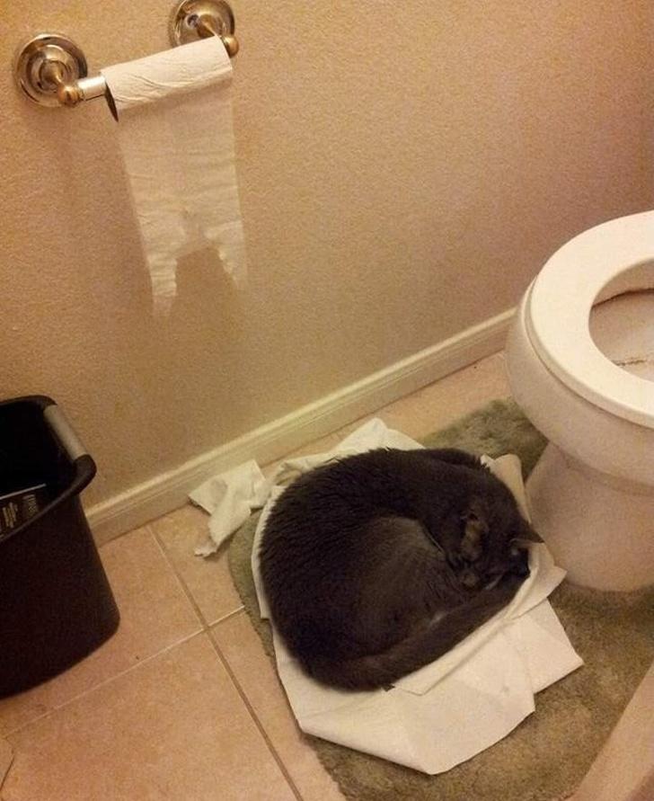 19張貓星人「真心WTF有夠難懂」的挑戰人類極限爆笑照