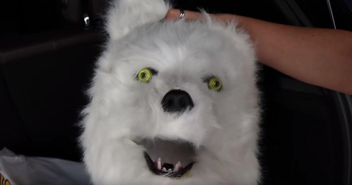 影/「主人扮狼」想嚇家中哈士奇 網友超意外:他沒被咬死?