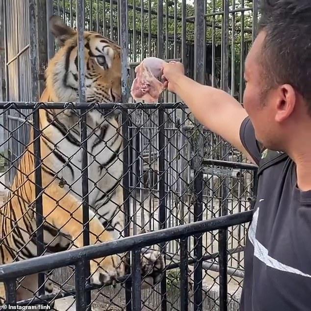 男子闖「被遺棄動物園」幫餵老虎   園長怒告:他還募款!