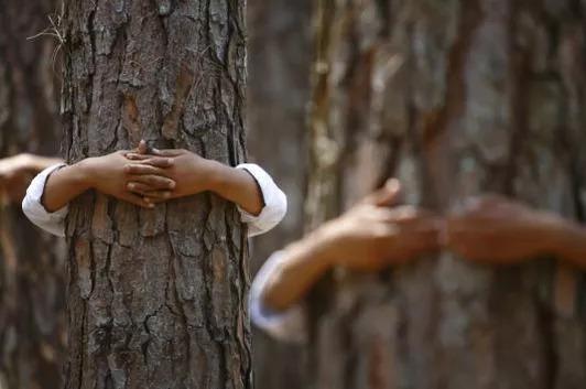 冰島林業局勸「所有人都該去抱樹」:從腳爽到頭頂!