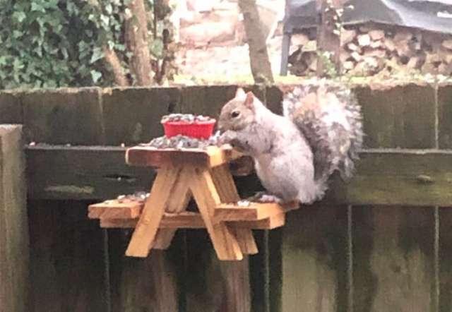 愛松鼠成癡!他親手打造「野餐桌還附3餐」 每天第一件事就是看牠們吃飯