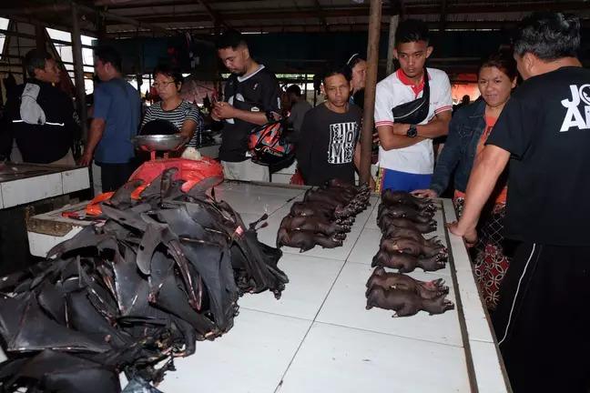 印尼市場「不甩武肺」照賣野味 饕客狂搶「滿桌蝙蝠」超震撼!