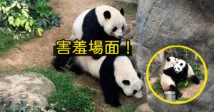 熊貓當朋友10年「突燃愛火」動物園嗨爆 直接公布「私密大戰照」!