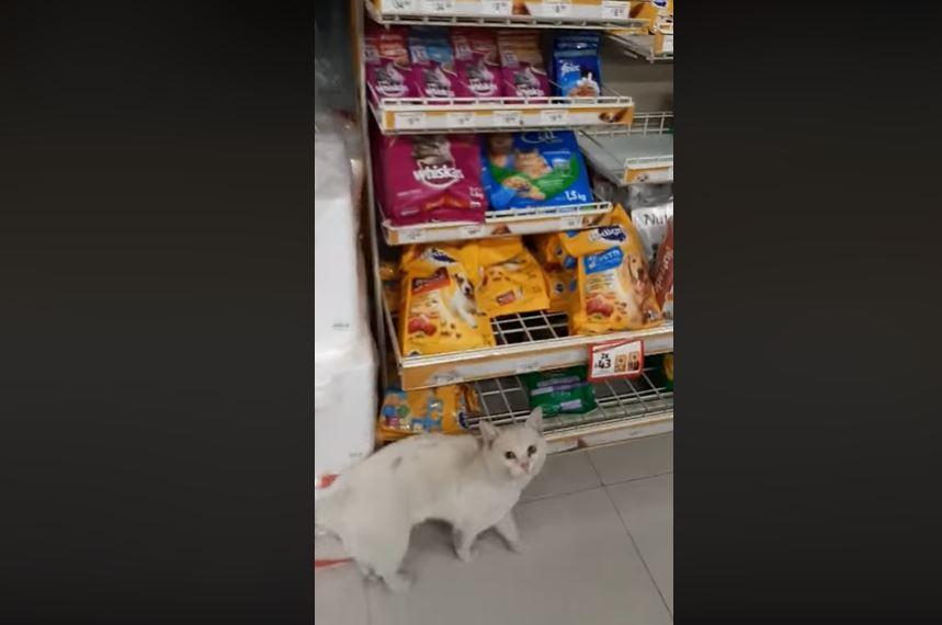 髒浪貓天天店外「耐心等候」 直到店員「忍不住上鉤」馬上指使:買那包給朕!