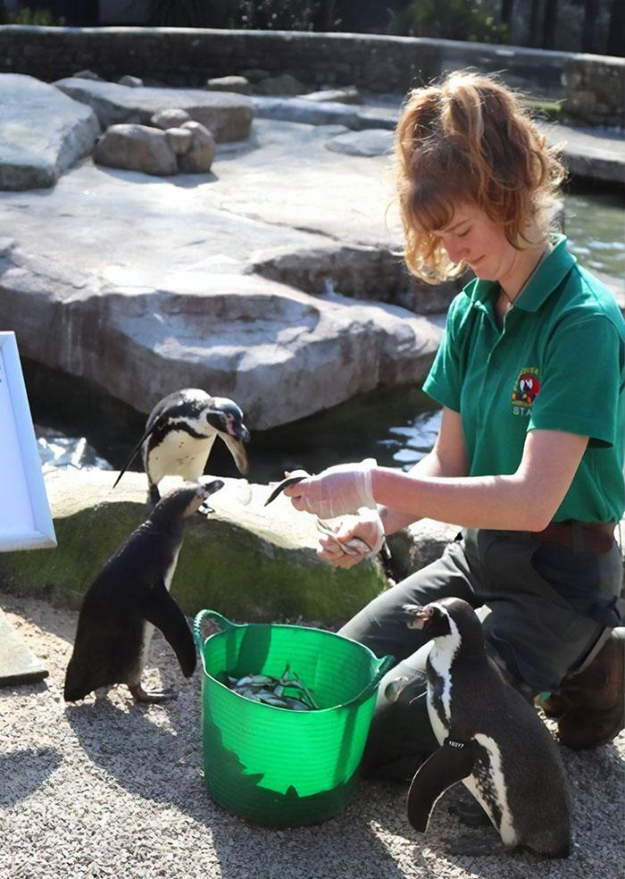 善良正妹自願在「動物園隔離12週」:這樣才有人照顧動物!