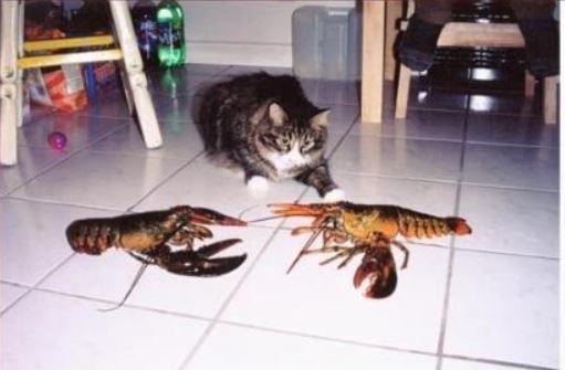 影/「賤烏鴉」挑釁兩貓戰起來!廝殺過程在旁「爽當裁判」