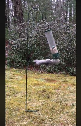 影/松鼠用「奧運級華麗動作」偷吃東西...小心會看上癮!