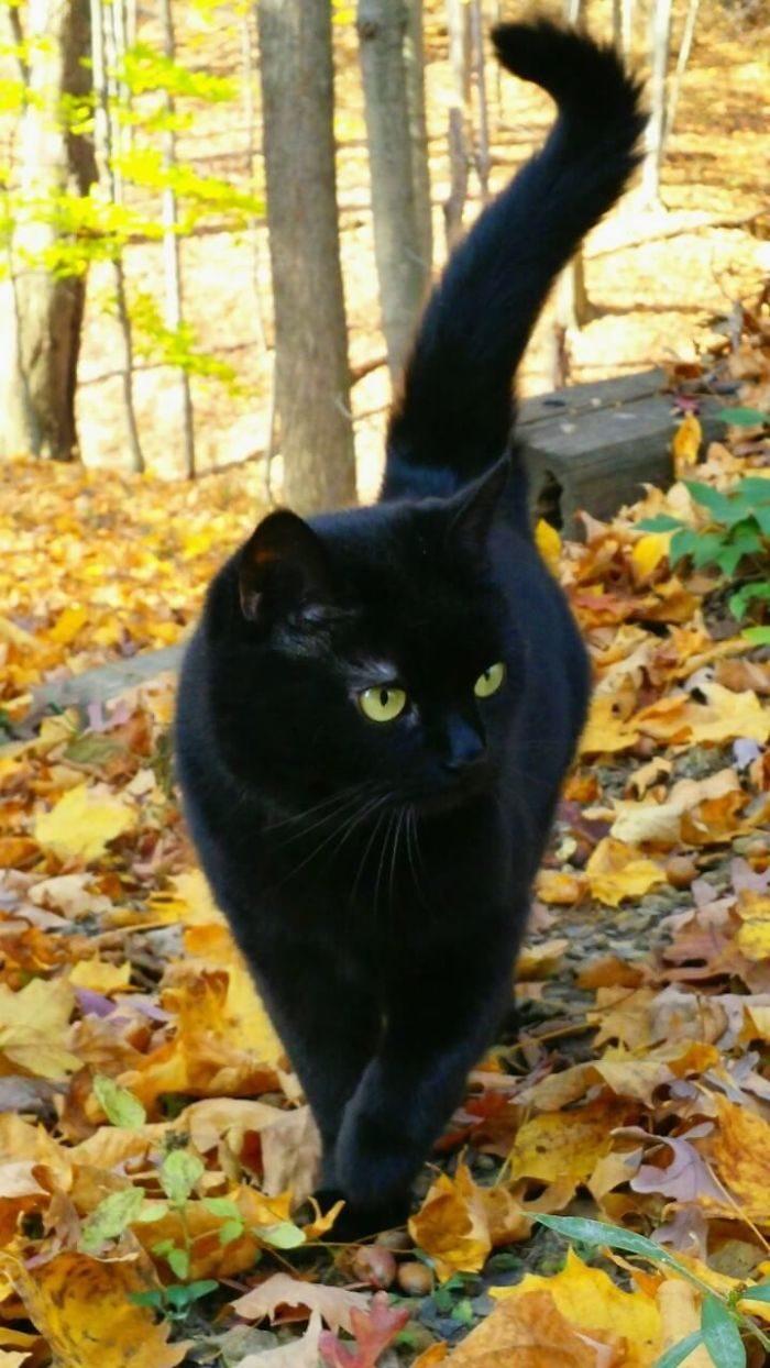 16張證明「黑貓VS黑豹是親兄弟」對比照 牠們「氣嘟嘟」完全長一樣!