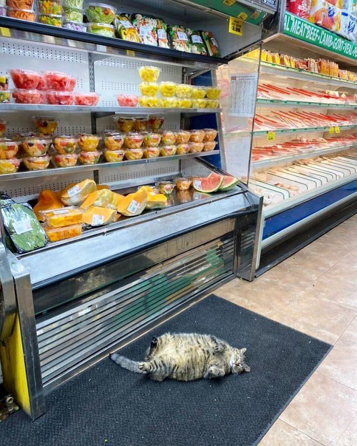 30隻「讓奧客滾蛋」的貓店長 自己「看守罐罐」想買先請客!