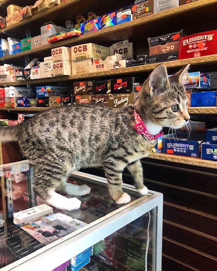 貓咪霸佔超市