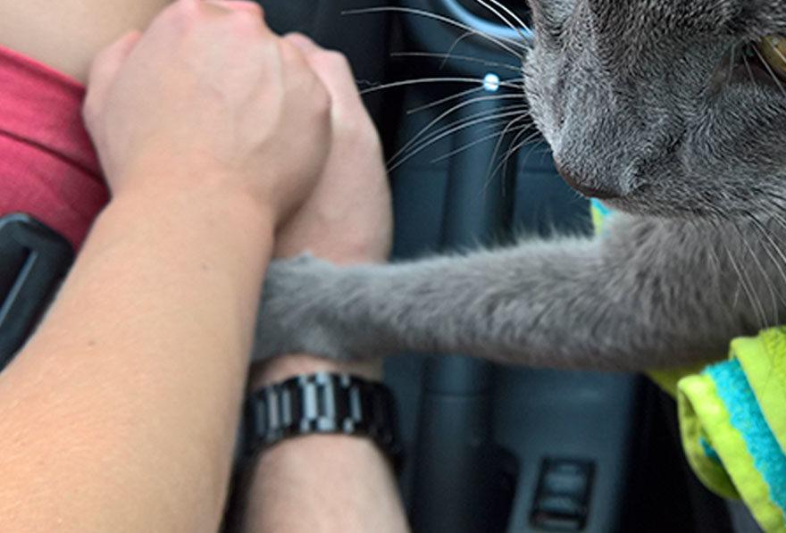 最後一次去獸醫院...貓皇「緊抓奴才手」安慰他:別害怕