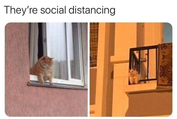 動物也懂社交距離!25張「毛孩拼防疫」比人類還認真