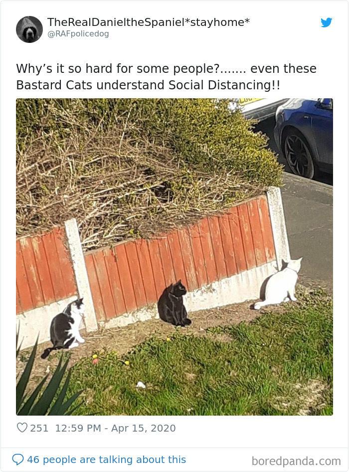 動物社交距離