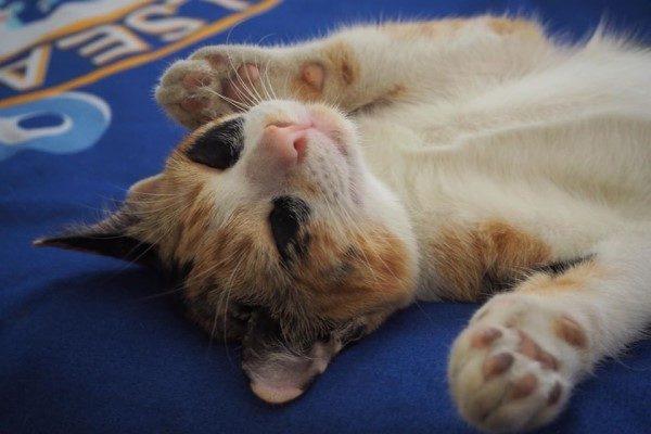 萌貓臉上掛「超重黑眼圈」 網友笑:到底幾天沒睡?