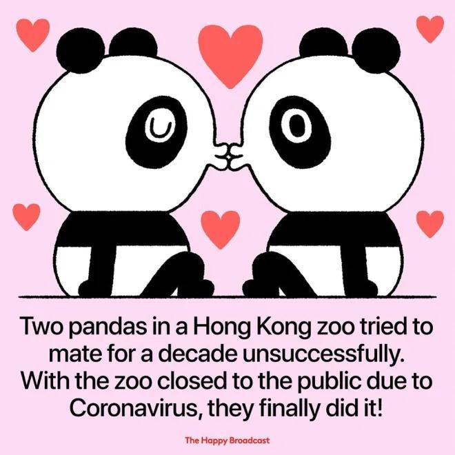 15件「因為武肺病毒」出現的好事 封城救人類也救了海龜!