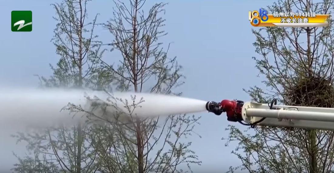 胖貓出軌追小三「卡樹上5天」 消防隊出動「大型水砲」成功拯救渣貓!