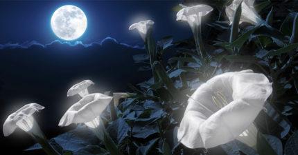 10種「只在夜晚綻放」的童話花種 《動物方城市》夜嚎怪是真的!