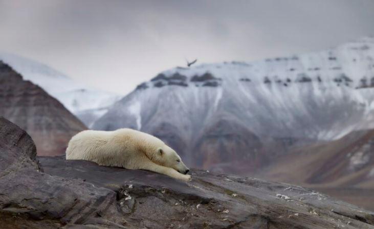 2020年「地球暖化」攝影作品出爐!「防毒面具」完全對應時事