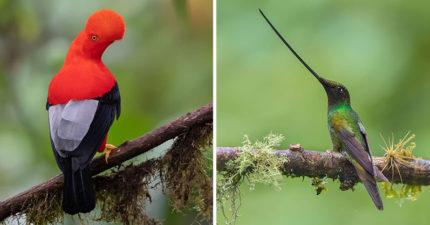 13隻自然界中「長相最特別的鳥」 鳥喙上「有彩虹」超有氣質❤