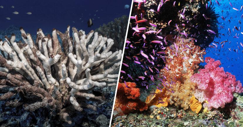 科學家準備用3D技術「復活珊瑚海」比原生的更強壯!