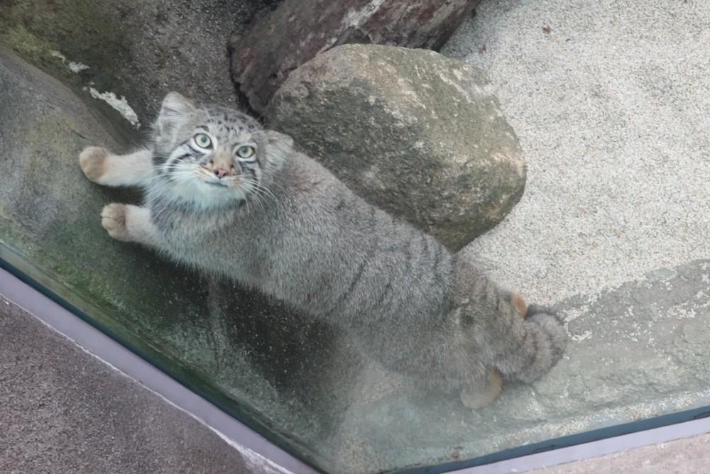 網友捕捉兔猻「脖子對折180度」超嚇人 網笑翻:貓界大法師?