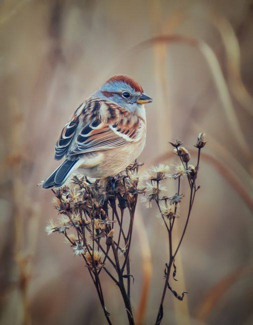 28隻大自然中「粉彩系小鳥」 就像一團團彩虹麻糬❤