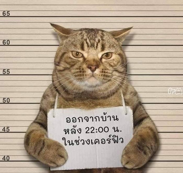虎斑貓「不甩宵禁出門散步」被警察活逮 極萌犯人照曝光
