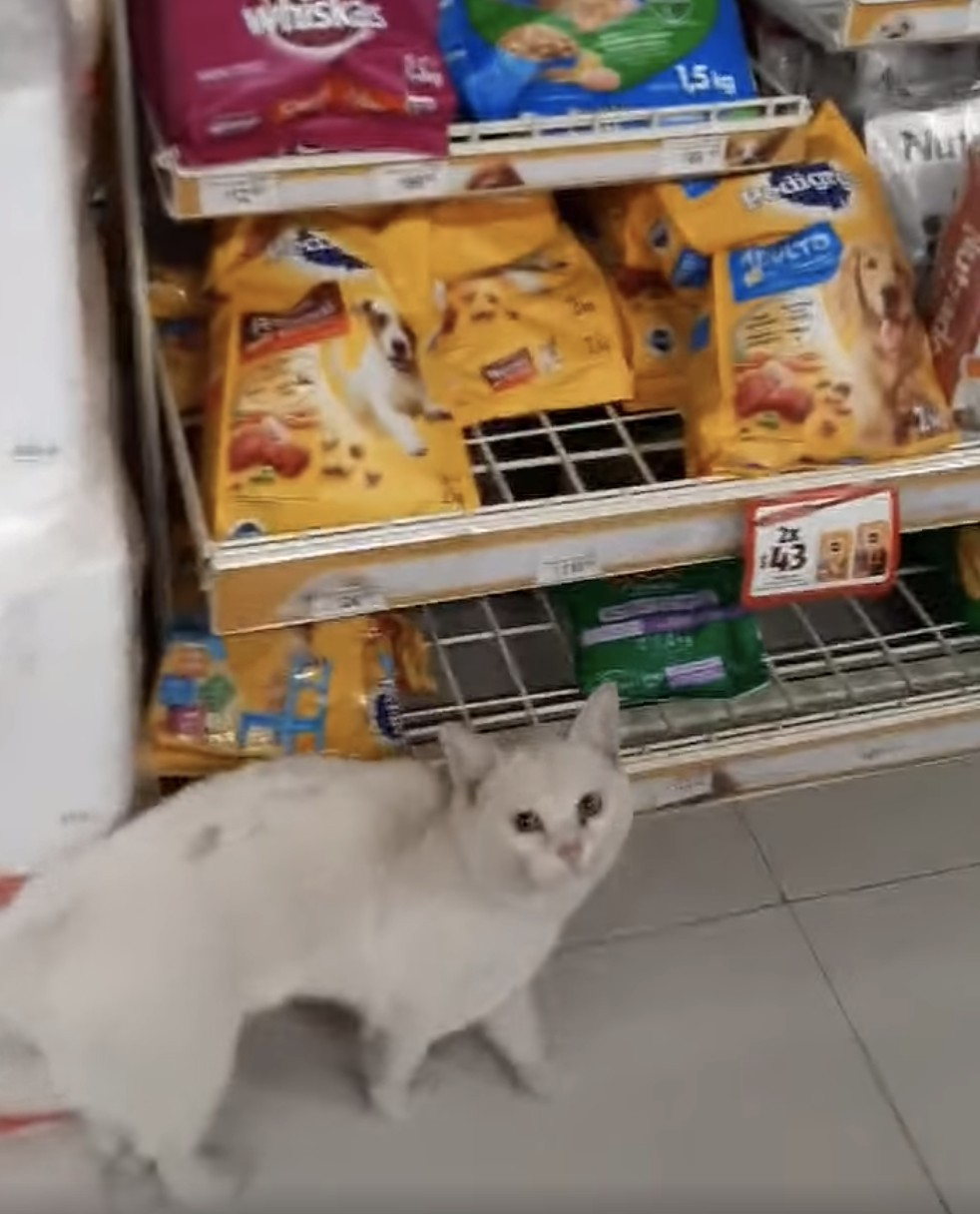 影/善良女心疼「流浪貓餓肚子」幫買貓糧才驚覺根本在被搶!