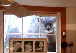 10幾天沒出門「動物來探望人類」超擔心 黑熊拍窗:活著嗎?