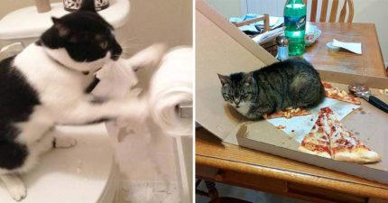 20個貓奴都懂的「崩潰日常」 電鍋「當貓砂盆」噁到想哭!