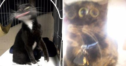 最新流行「醜貓照大賽」完美的瞬間像捕捉到另一種生物!