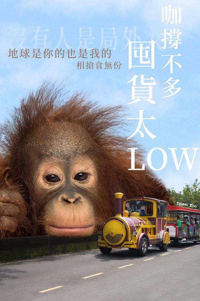 木柵動物園PO「巨大化動物」宣導防疫 「貓熊哥吉拉」可愛到逆天❤
