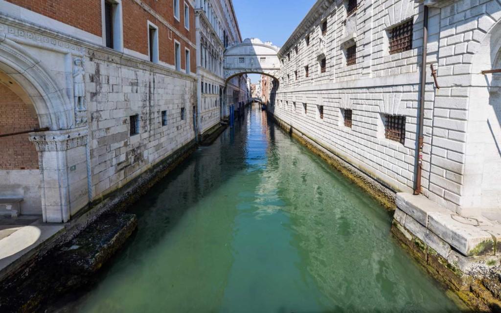 威尼斯運河因「遊客消失」重生了 驚見「水母」爽游!