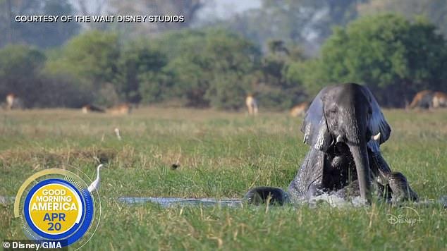 影/梅根首任「迪士尼配音員」語出驚人:我能感受大象的情緒