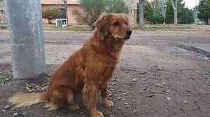 主人「入獄」關3年半 忠犬「警察局苦等」等到員警不讓他走!