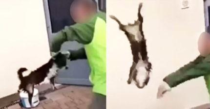 屁孩輪流把幼犬「摔牆、溺水」PO網炫耀 警方:民眾可幫逮人