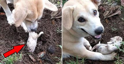 幼犬夭折「被埋進土裡」安葬 狗媽堅持「挖出來」主人超鼻酸
