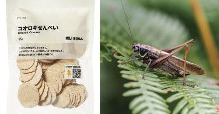 無印良品「蟋蟀仙貝」爆紅 獵奇口味竟然能「拯救地球」!