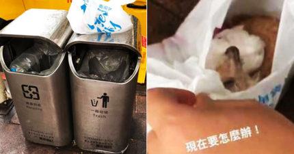 惡飼主把「狗狗裝袋」丟垃圾桶 他檢查氣瘋:沒給牠任何機會逃!