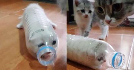 變種「貓貓蟲」現身!移動方式害其他貓傻眼:壞掉了...