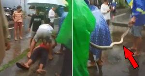 想抓「2米巨蟒」回家當寵物 反被「鎖喉回擊」當場送醫急救!