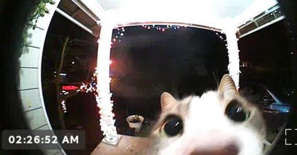 貓貓「被鎖門外」按電鈴求救 「讓偶進去」崩潰表情太經典!
