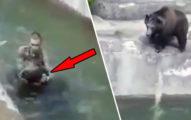 影/醉漢偷闖園區「跟棕熊幹架」 被「重罰20萬」關鍵在口罩!