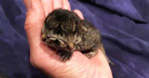 超罕見「雙臉貓」得靠4倍力量存活 同時「吵著吃飯」媽媽超累