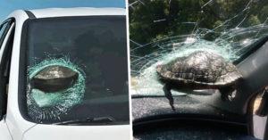 真實版瑪莉歐!半路「飛天烏龜」砸中窗 駕駛嚇瘋:差點就掰了!